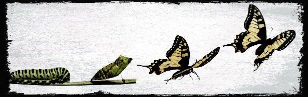 caterpillar3-w800-h600